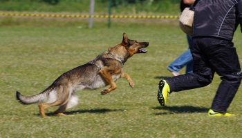 Summer Unleashes Sharp Rise in Dog Attacks